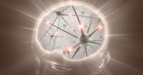 mituri-creier03